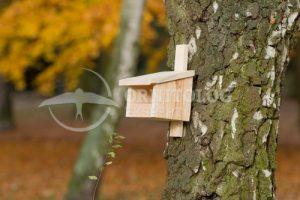 jak zawiesić budkę dla ptaków do drzewa