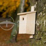 wieszanie na drzewie budki lęgowej dla ptaków