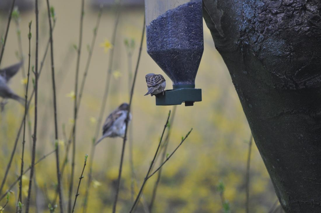 Dowiedz się jak dokarmiać ptaki w ogrodzie