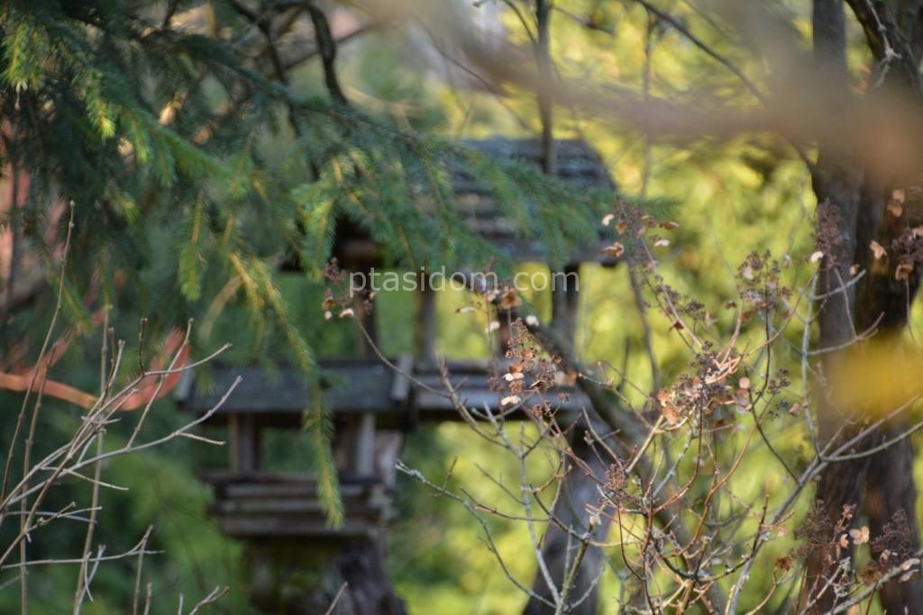 Wieszanie budek lęgowych na ogrodzie