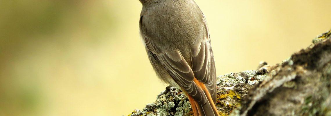 domek dla ptaków - kopciuszek na pniu