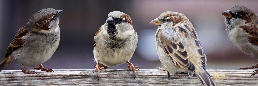 Budki lęgowe dla ptaków on-line