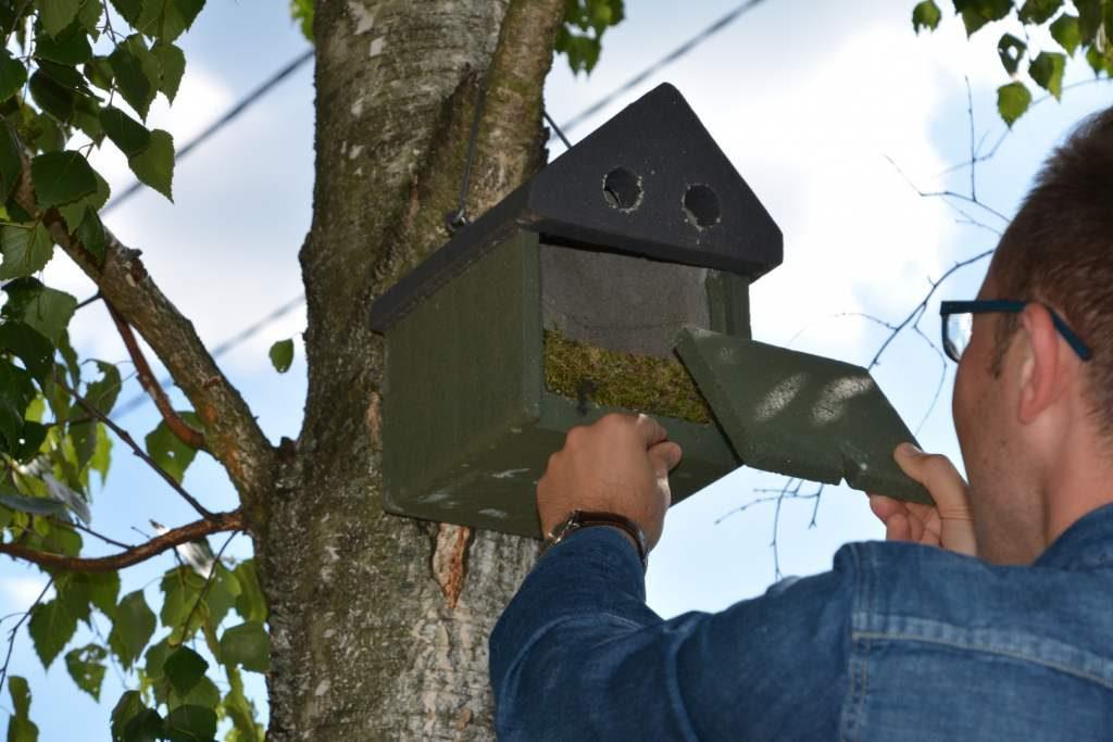 Ornitolog czyści budkę lęgową