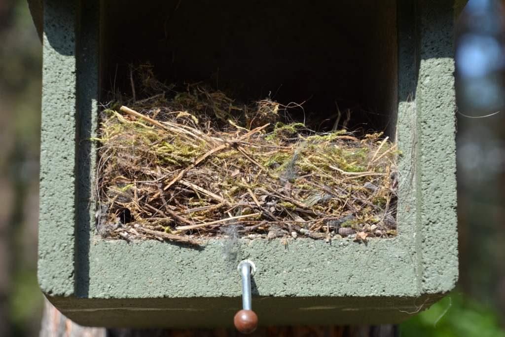 Gniazdo w budce lęgowej