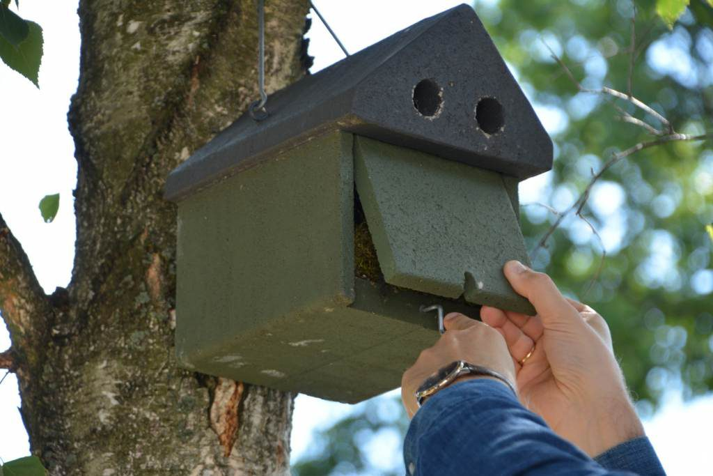 Wieszanie budek lęgowych dla ptaków dziuplastych