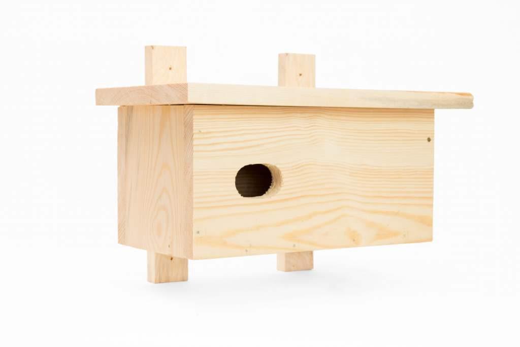 Zagrożenia ptaków ptasi dom com