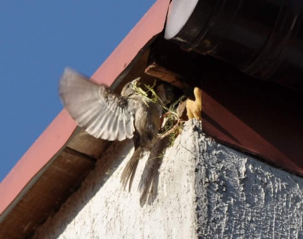 Zagrożenia ptaków żyjących w mieście