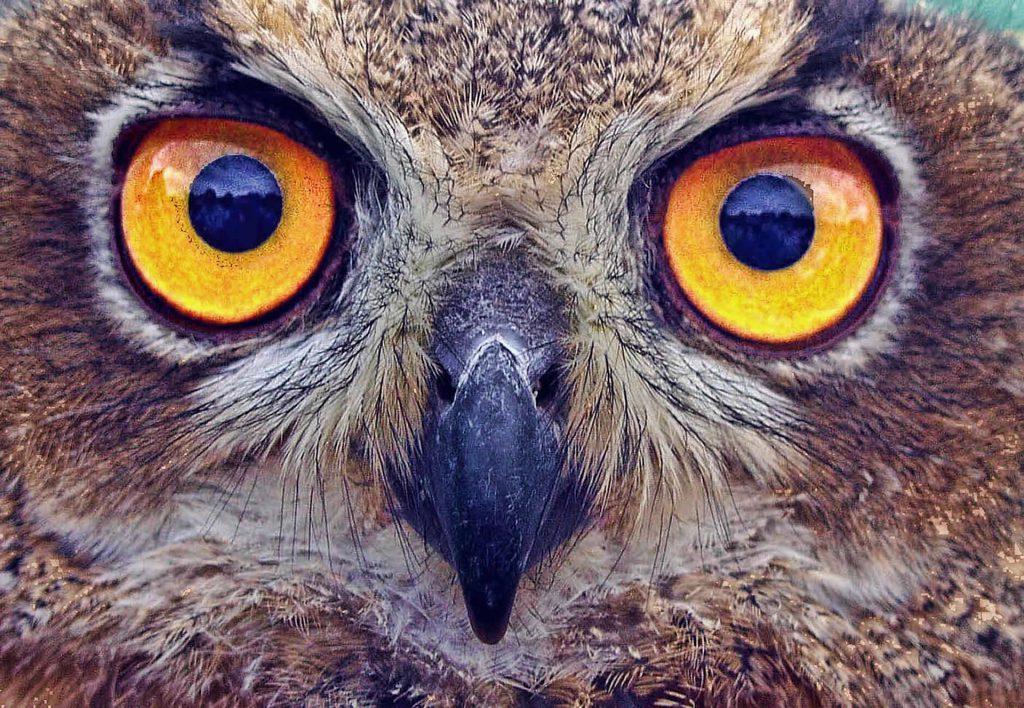 Konstrukcja ptasiego oka