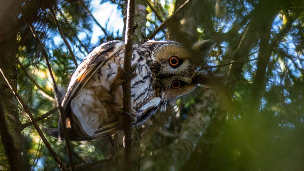 Ptasie zmysły wzrok