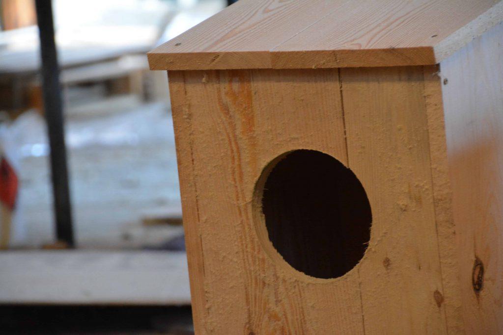 Dowiedz się jak zrobić domek dla ptaków