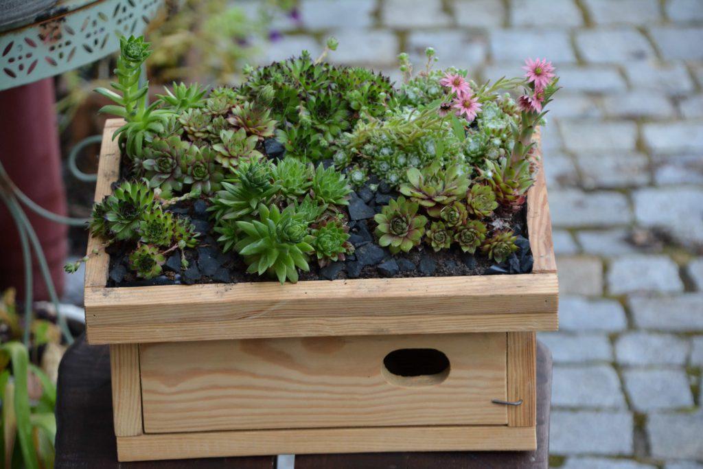 Budki dla jerzyka z roślinkami na daszku