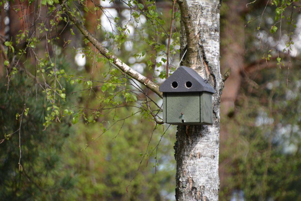 Budka dla ptaków do ogrodu, dowiedz się jaką wybrać