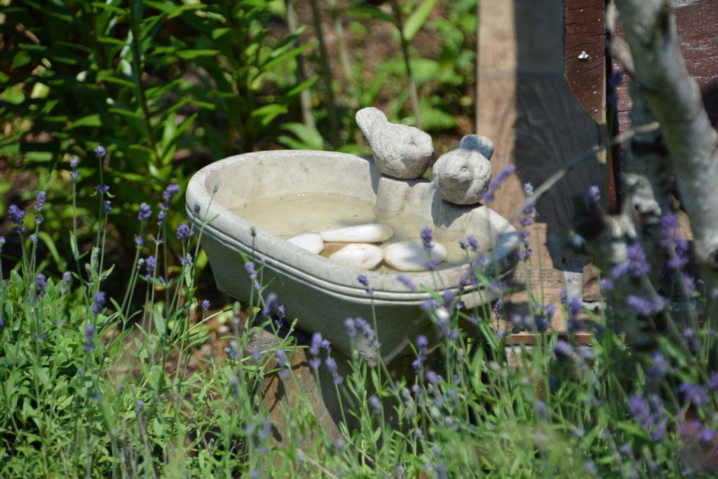 Roślinność ogrodowa w ogrodzie przyjaznym dla ptaków